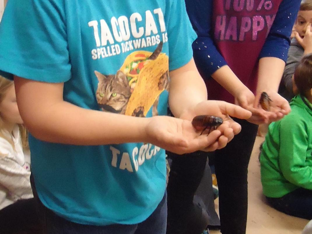 Students holding Madagascar cockroaches